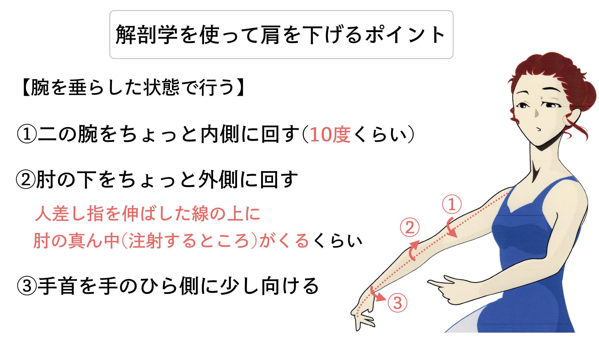 バレエ 肩を下げる 解剖学