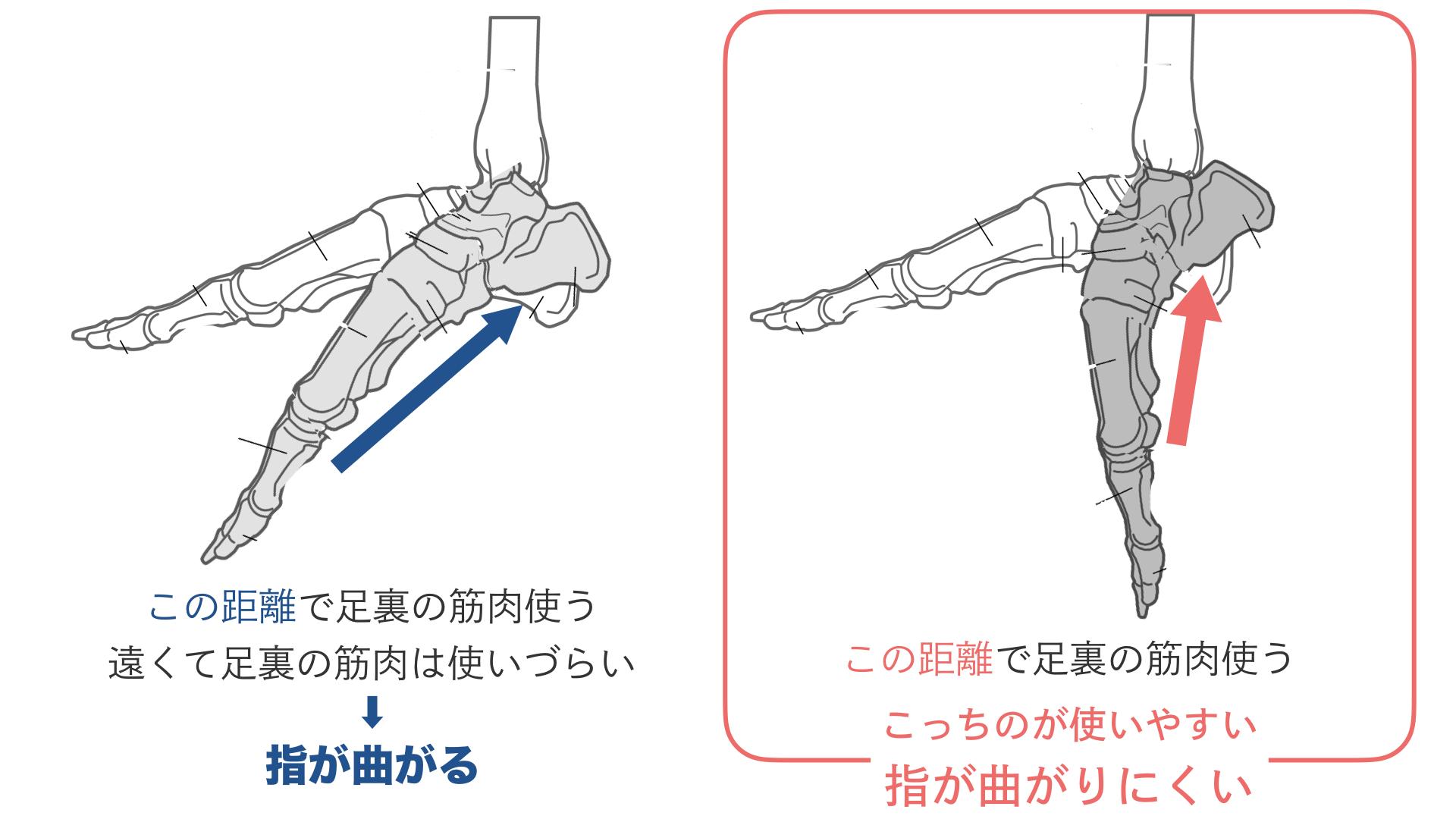 足裏の筋肉を使ってつま先を伸ばすために.024