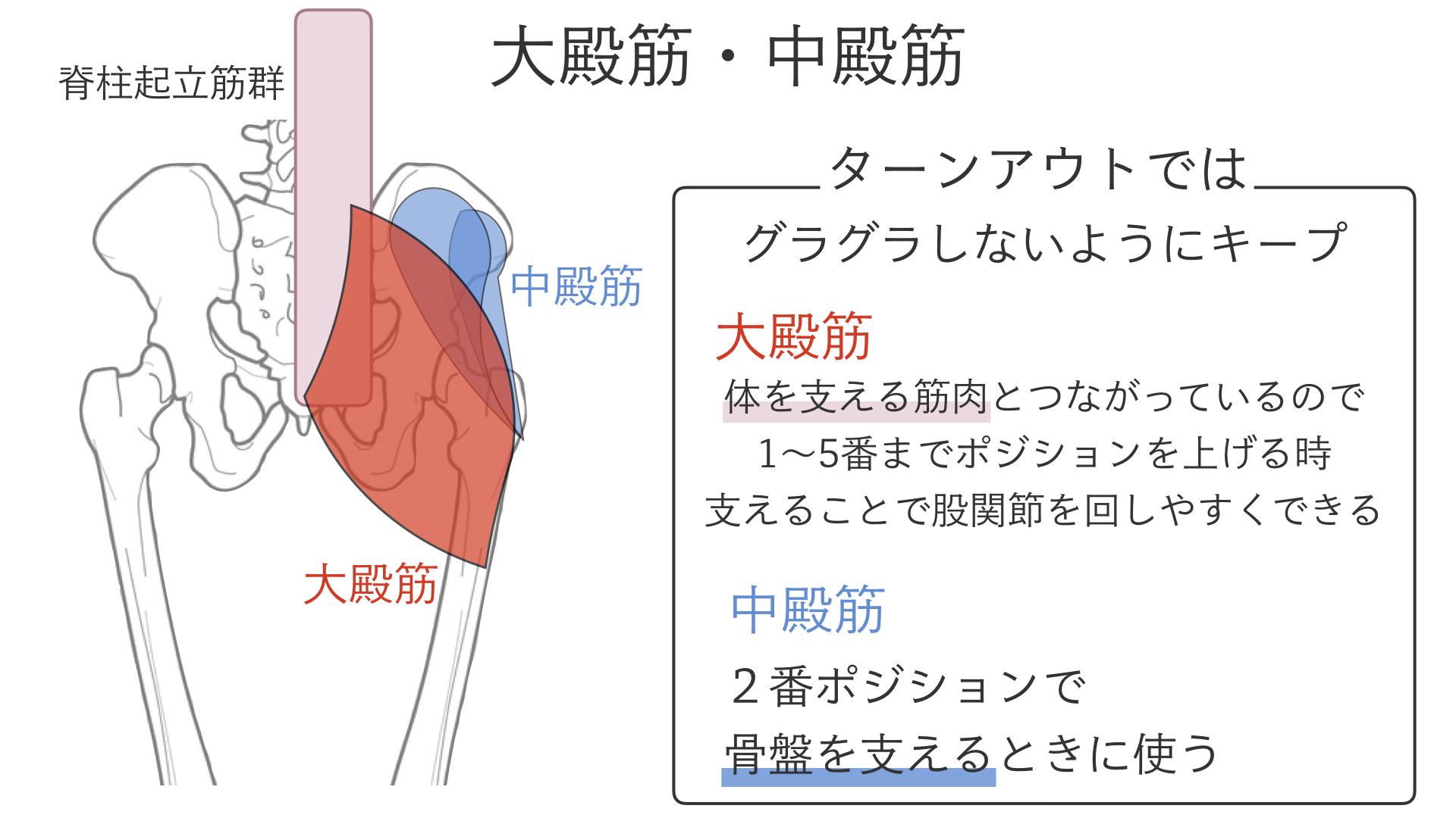 股関節を開く(外旋する)筋肉.004