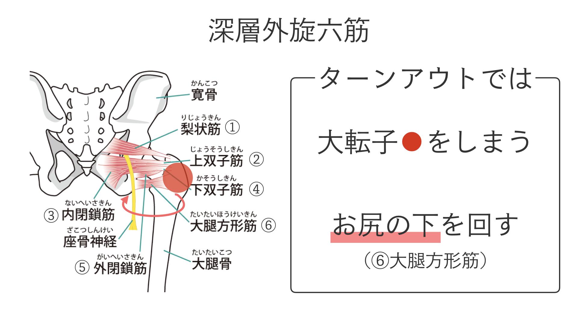 股関節を開く(外旋する)筋肉.008
