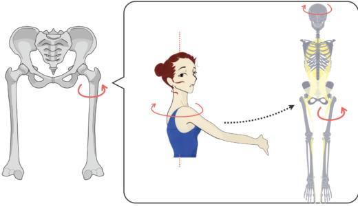 股関節の硬さに左右差がある隠れた原因「顔がつかない」