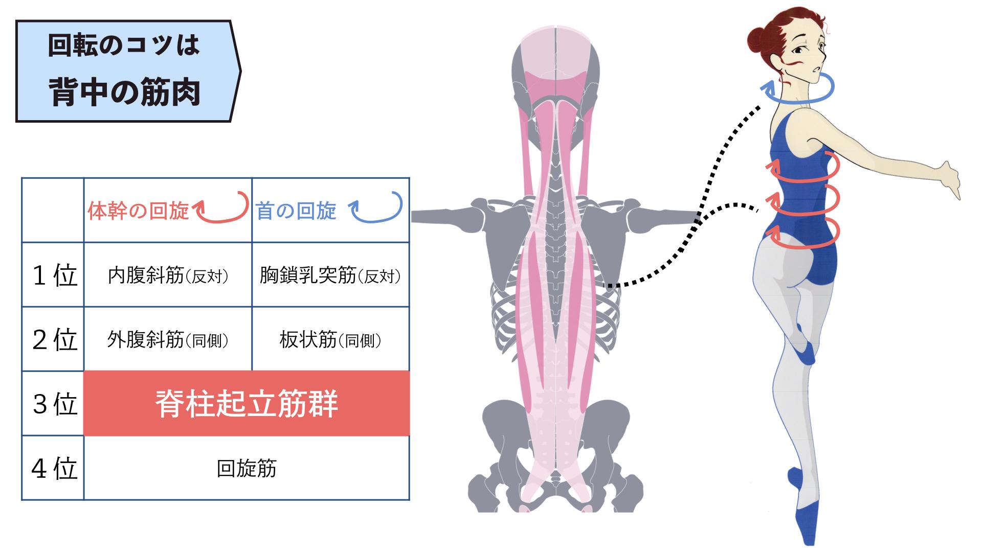 回転で使う筋肉