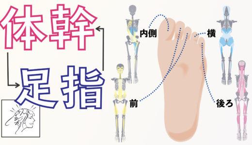 体幹強化に【足指が大事】である意外な理由|東洋医学的な見方