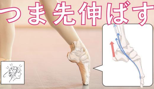 【つま先伸ばす】足のどこからやると効率良い?|バレエ筋肉ハンドブックより